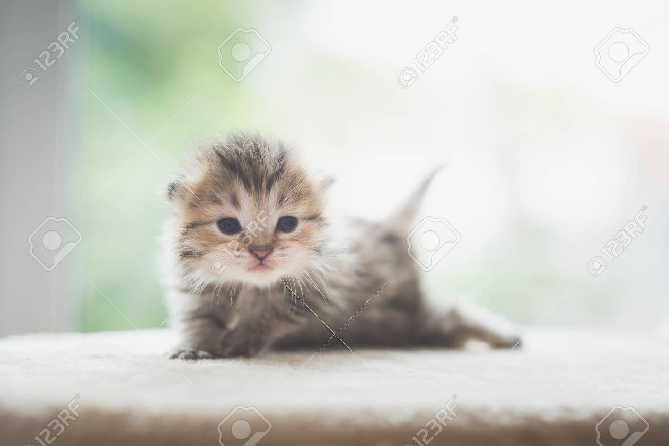 Close Up Of Cute Newborn Kitten Looking At Camera Sponsored Cute Close Newborn Camera Kitten En 2020