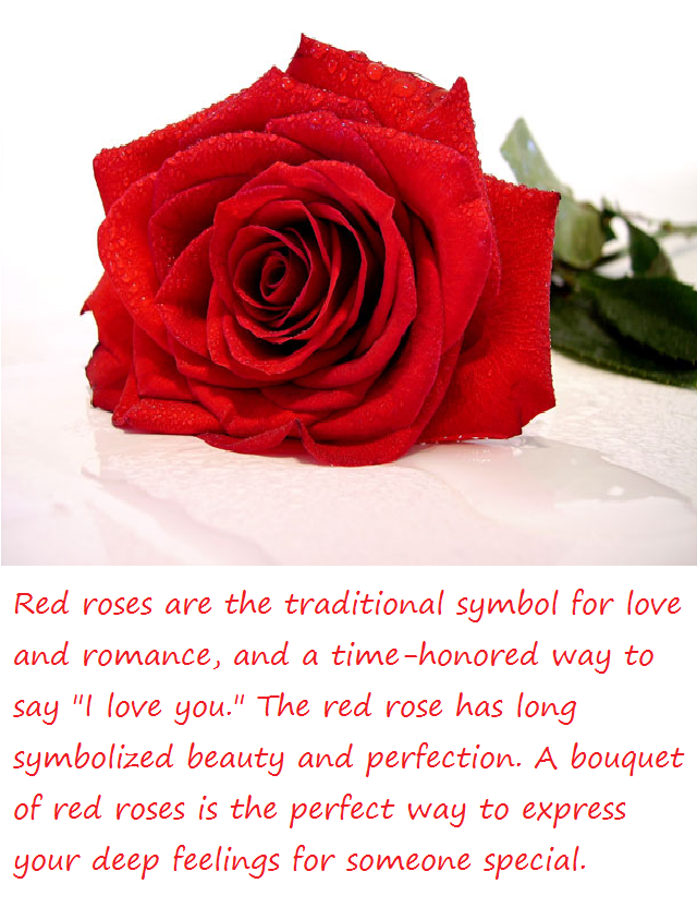 Red Roses Meaning Google Search Seeing Red Pinterest