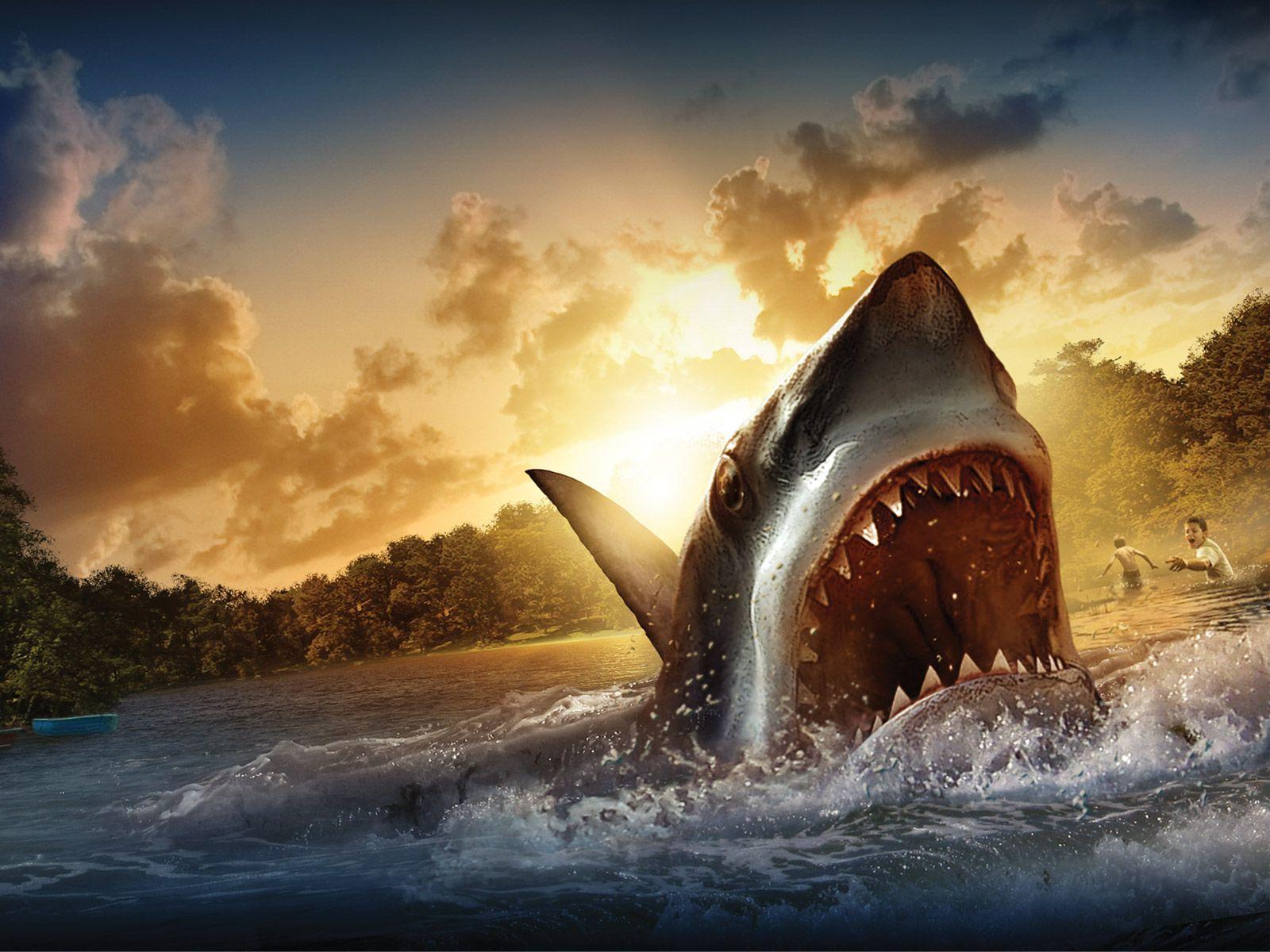 Shark Jumping Wallpaper Hd Jersey Shore Shark Attack