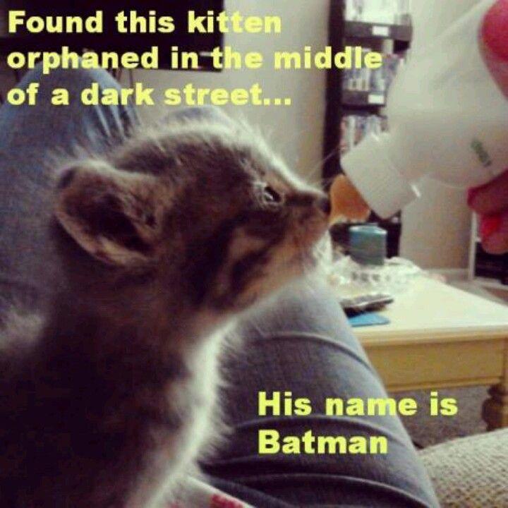 Batkitty!