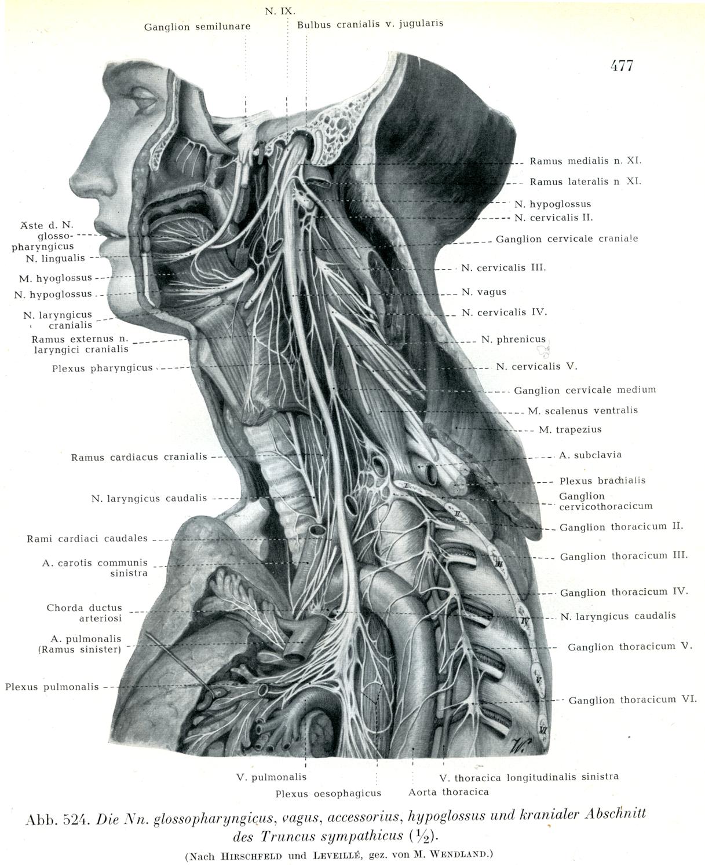 Rauber Kopsch Abb2.   Science > Illustration   Pinterest