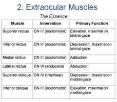 extraocular movements | Eye Movements (29) flashcards