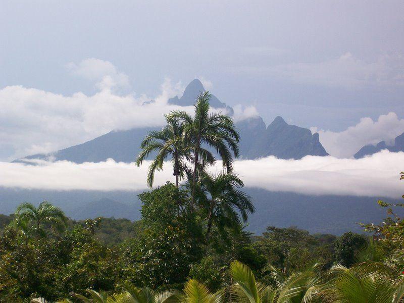 Parque Nacional do Pico da Neblina - Brazil | Brasilianas.Org