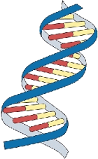 DNA worksheet- actually good. | Dna worksheet, Dna artwork ...
