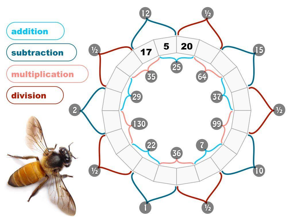 Pollinator puzzles multiplication division matematicas