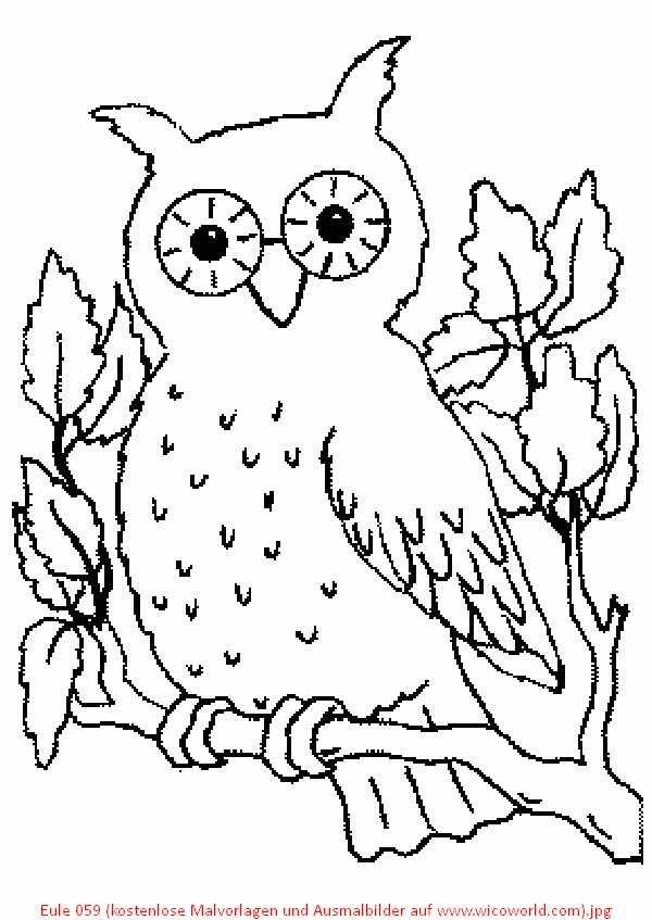 Pin von Eva Gubik auf owls | Pinterest | Kostenlose malvorlagen ...