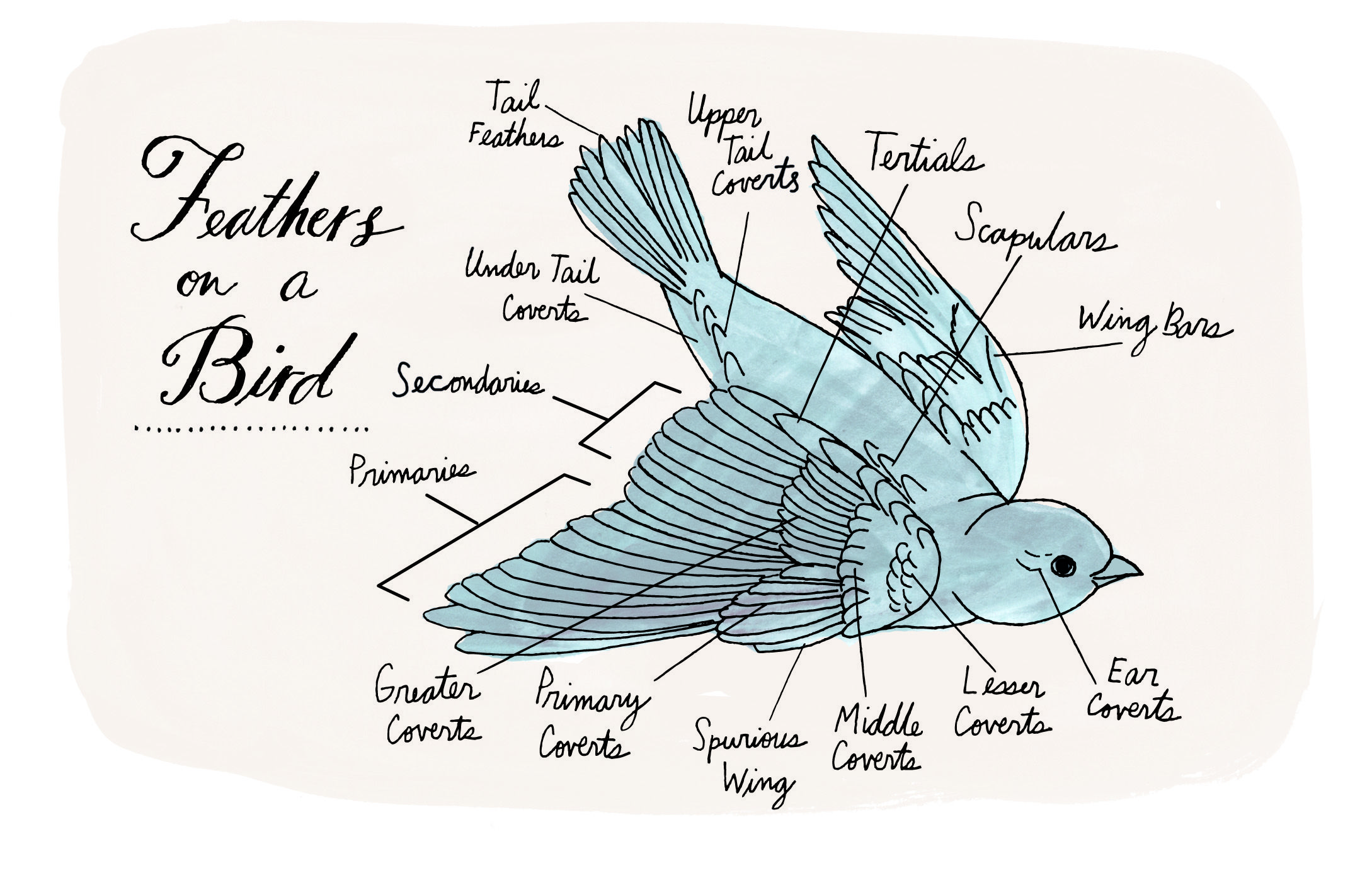 An artist\'s field guide to nature\'s overlooked wonders   Pinterest ...