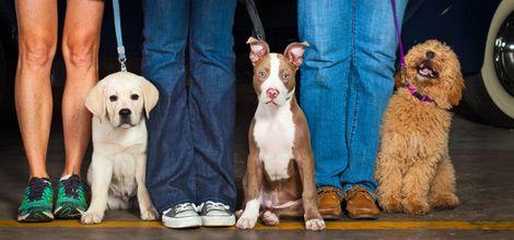 Best Dog Training In Houston Dog Training Classes Dog Training