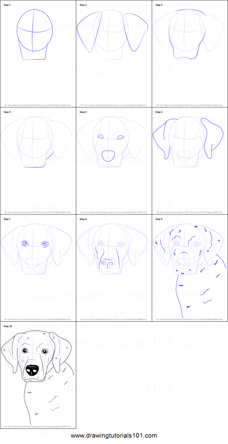 Dog Pictures Step By Step