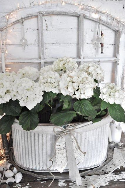 love the window and the flowers !