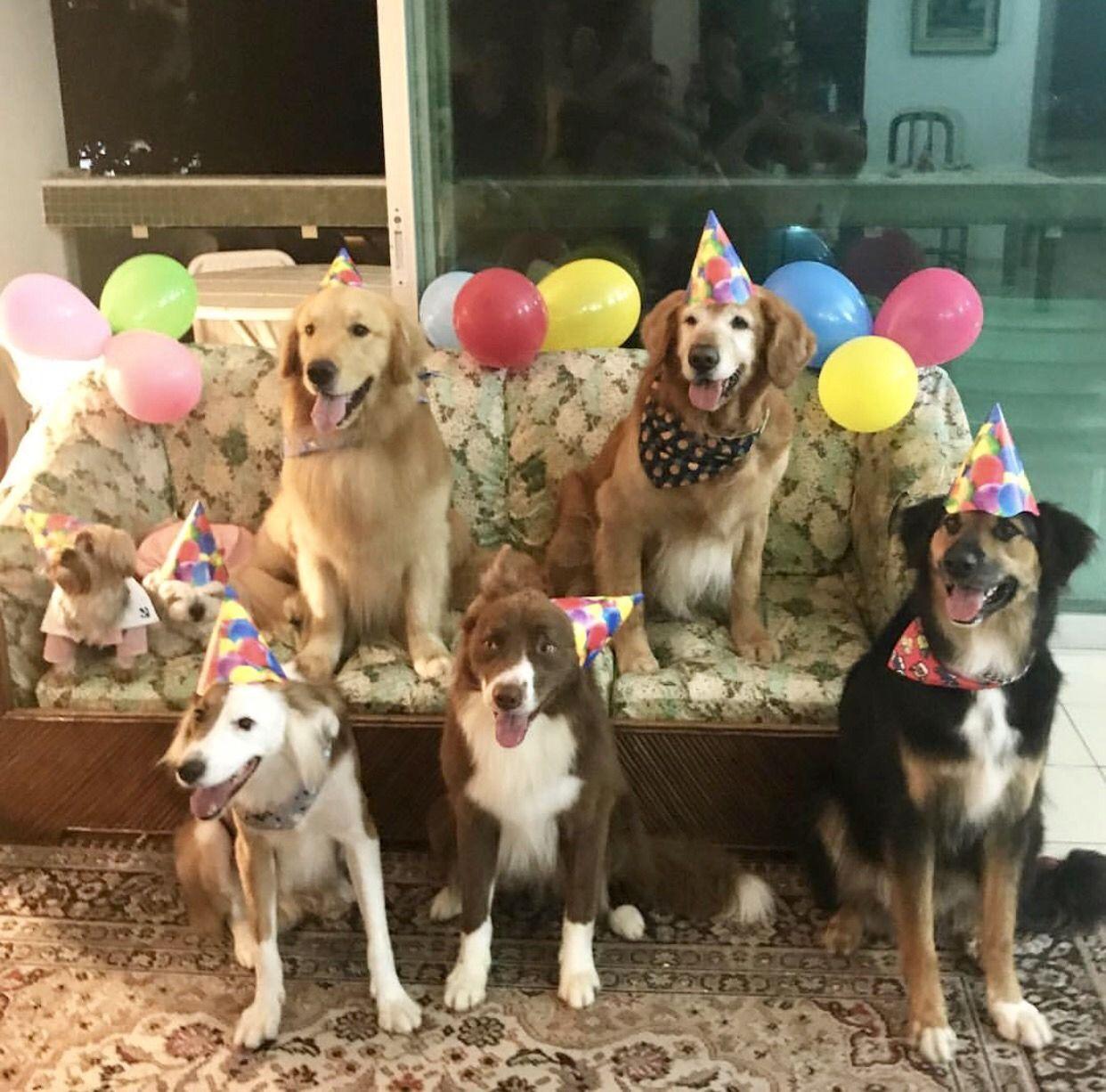 The dog on the far left