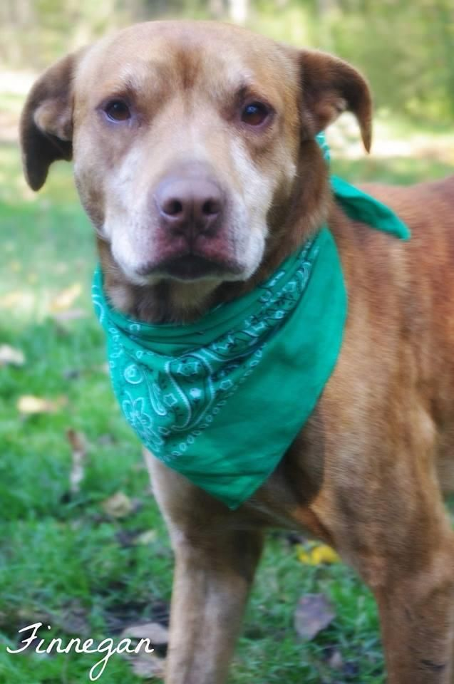 Adopt Finnegan On Adoptable Pets Animals Animal Rescue Find Pets
