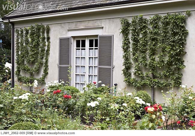 Garden Alongside Of French Country Stucco Home With