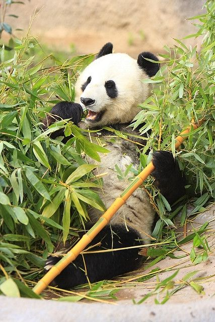 pandas order by