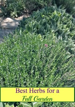 Just because the weather is getting cooler doesn't mean that you can't still have an herb garden, These are the best herbs to plant in your fall garden!