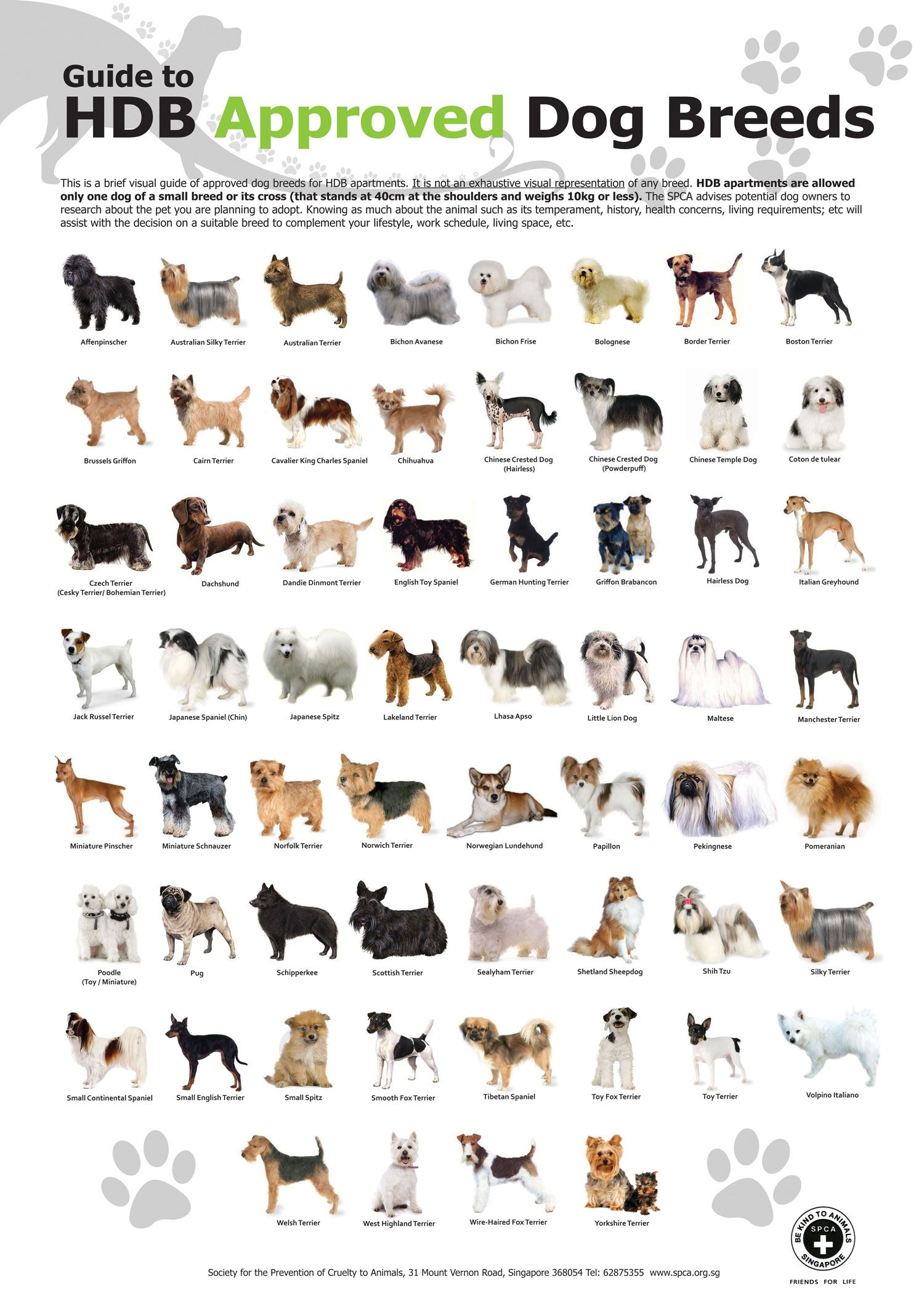 Guide To Hdb Approved Dog Breeds In Singapore Dog Breeds Chart
