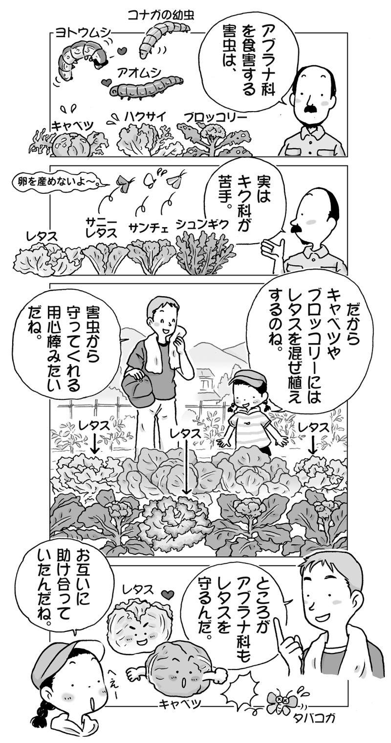 家庭菜園イラスト イラスト 家庭菜園 ガーデン