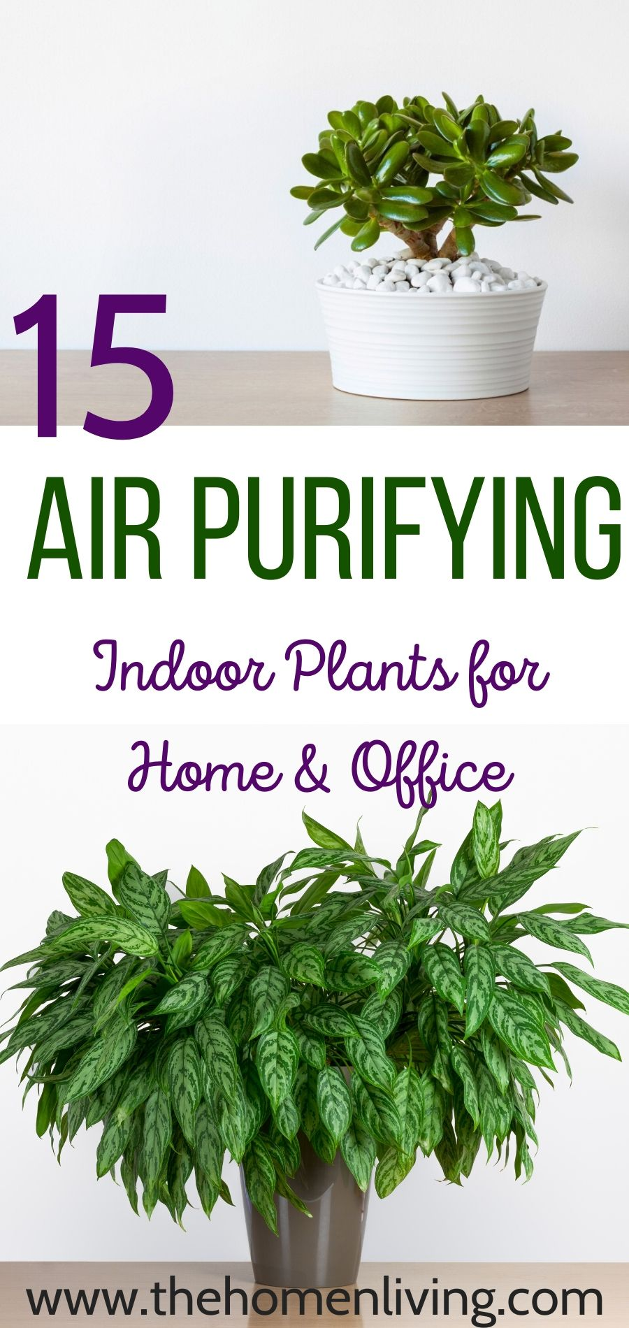 Air Purifying Plants 15 Indoor Plants That Clean The Air And Remove Toxins In 2020 Indoor Air Purifying Plants Air Purifying Plants Air Purifying House Plants