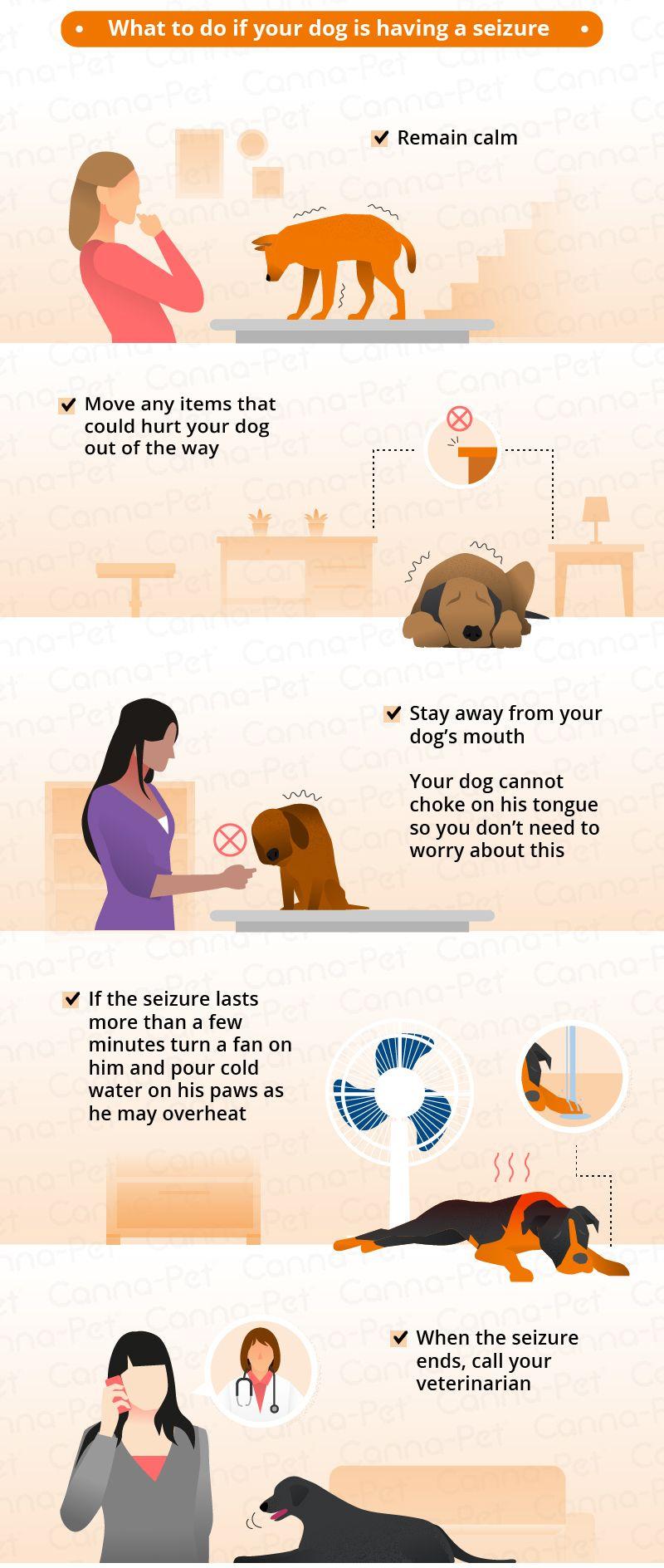 Dog Seizure Symptoms Natural Remedies Dog Seizures Seizures