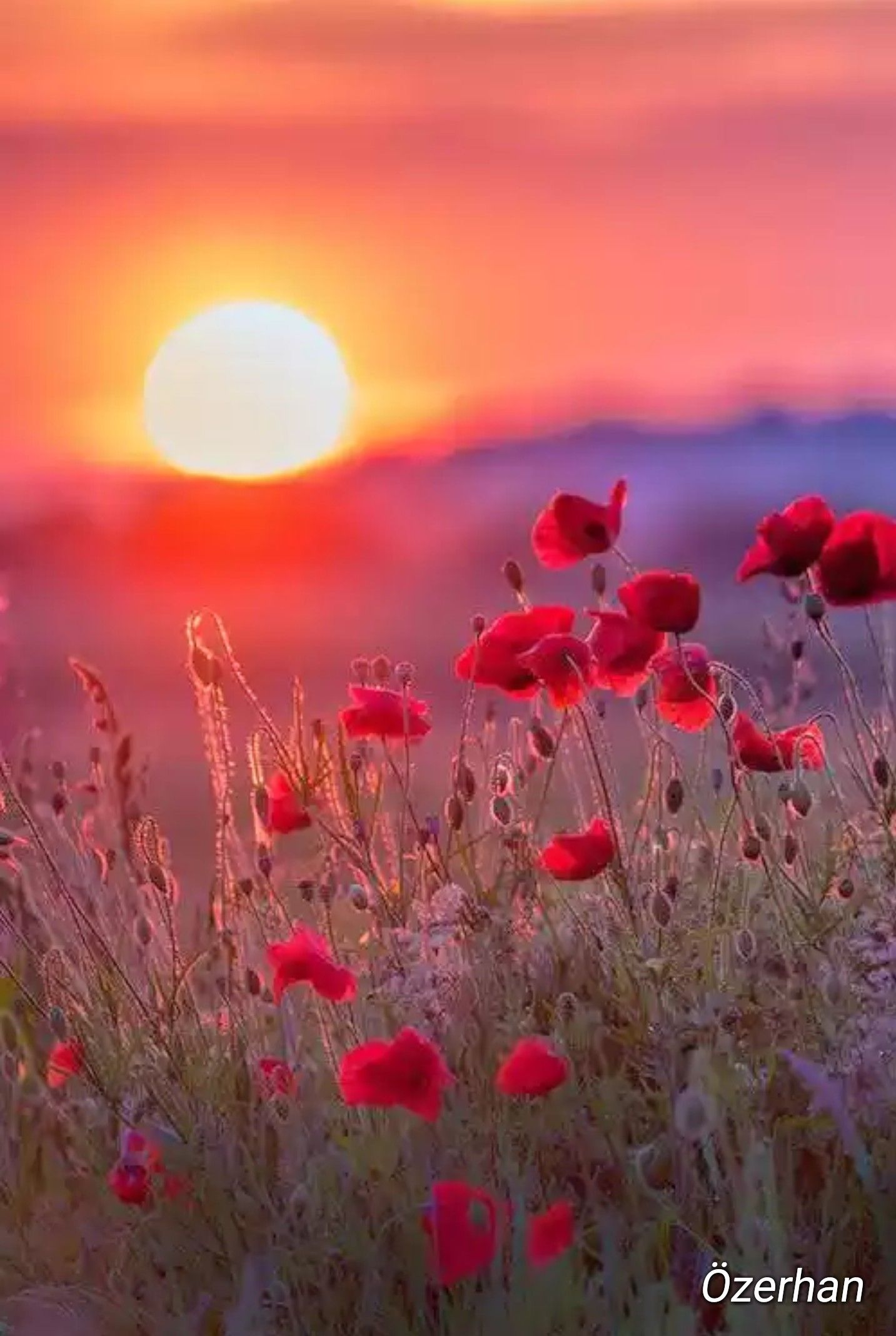 Pin by vanessa woods on beauty in nature pinterest sunset gorgeous sunset kissing meadow of flowers izmirmasajfo