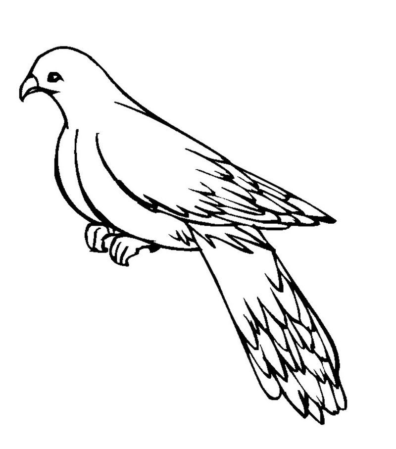 Printable Pigeon Coloring Pages 001 Bird Coloring Pages Animal Coloring Pages Coloring Pages