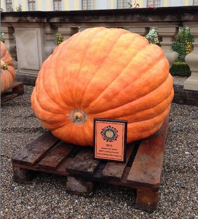 Pin by Helena Marszałek on Dynie Pumpkin, Food, Vegetables