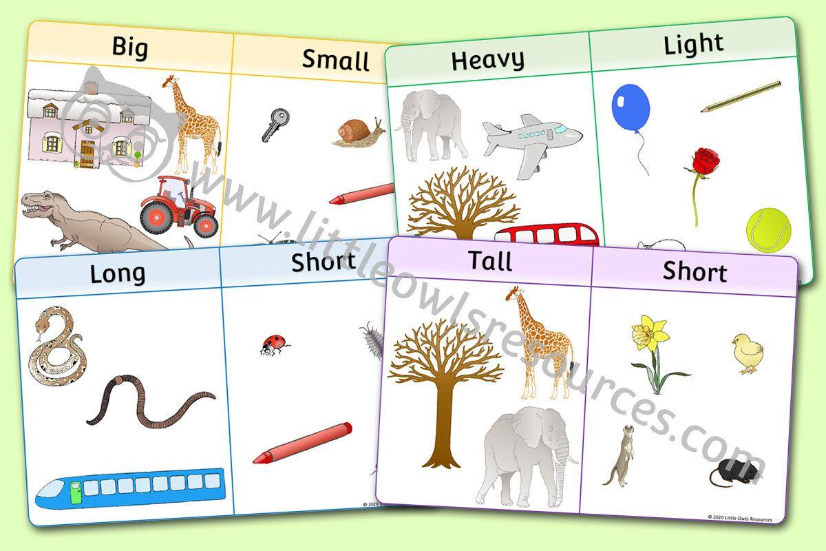 Size Comparison Posters Little Owls Resources
