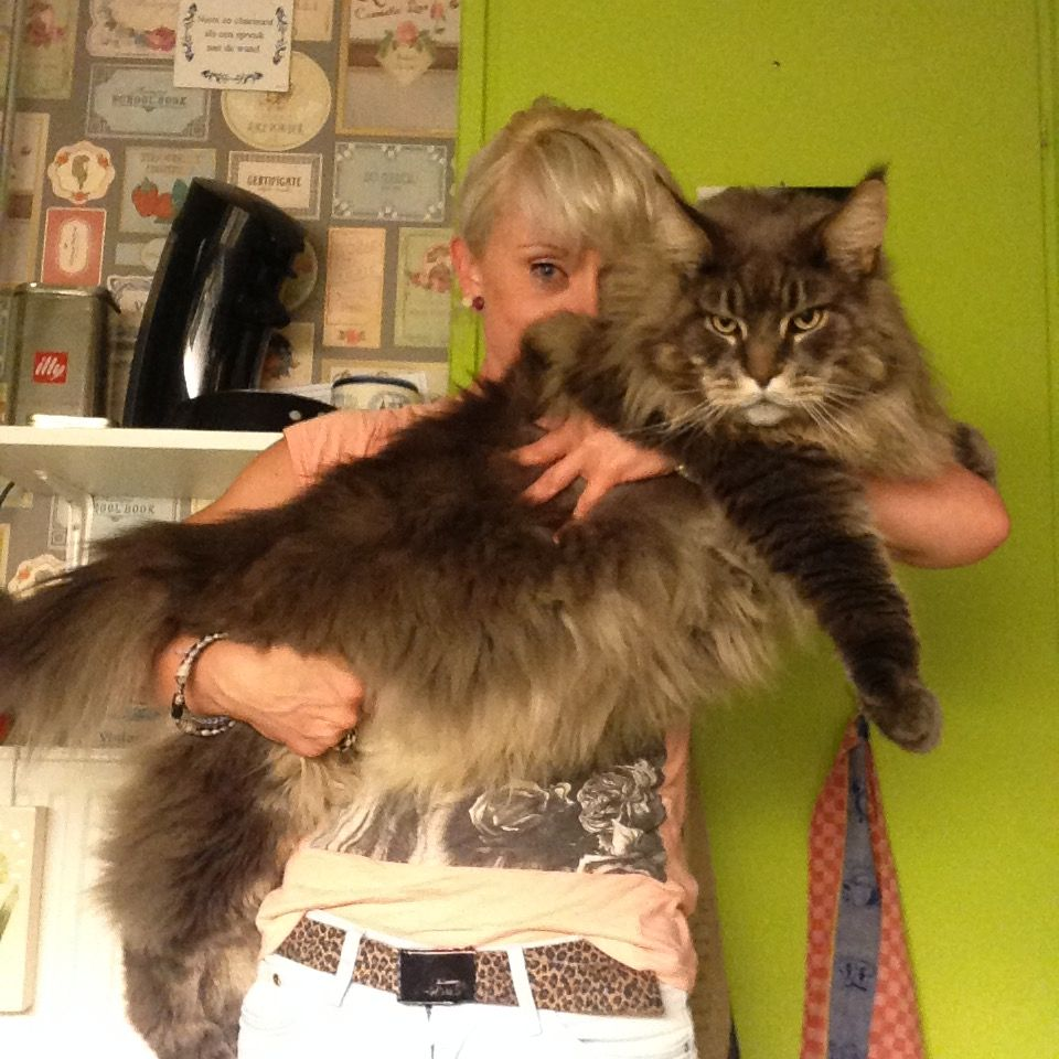 Pin On Supersized And Fat Cats