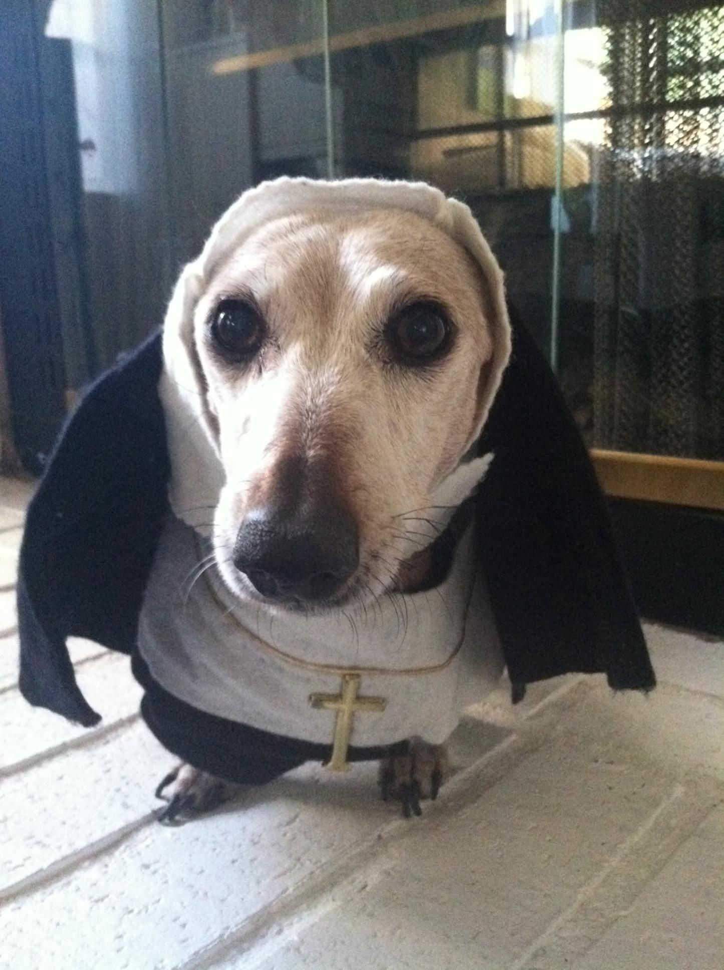 This Is My Dog Sister Mary Daisy Http Bargainbabe Com 10 Dog