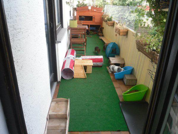 25++ Hasen auf dem balkon 2021 ideen