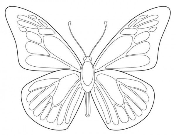 Free Butterfly Drawing Download Butterfly Outline Butterfly