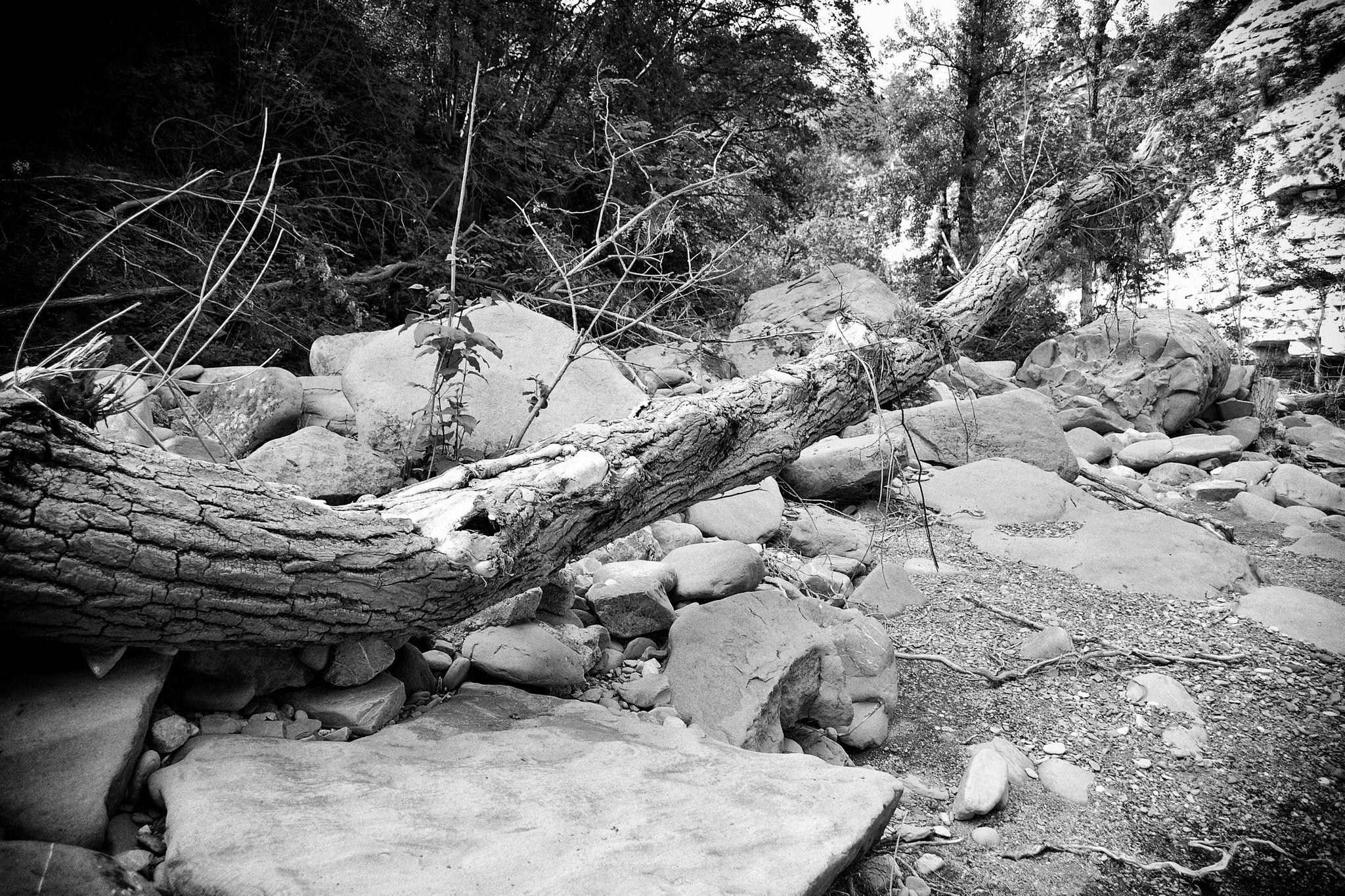 https://flic.kr/p/t8Hbh8 | Tronco al fiume | Santerno
