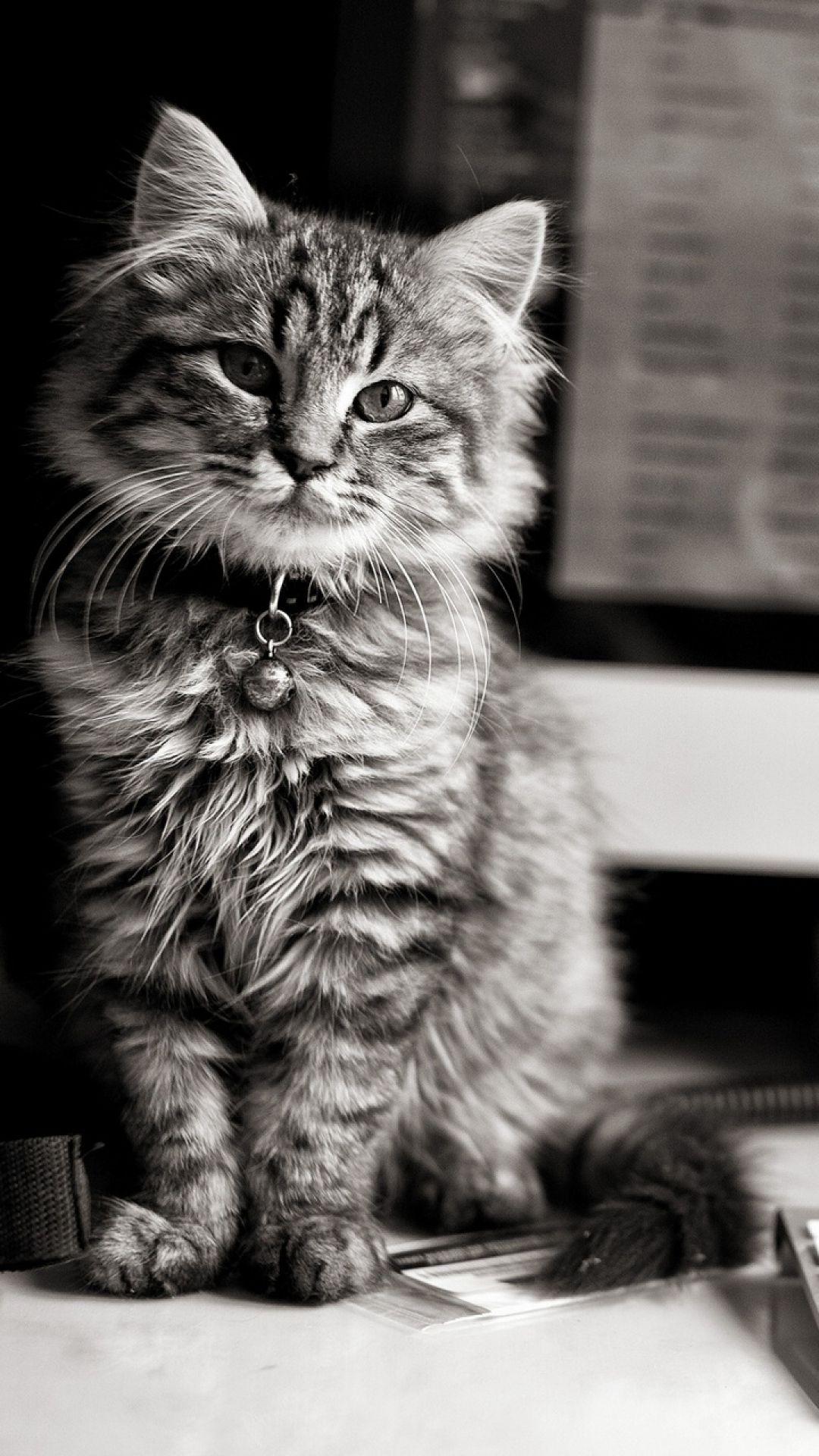 Kitten Cat Computer Keyboard Apple Mac Black And White