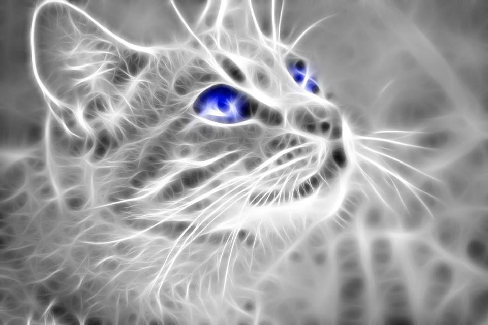 Epingle Par Catherine Vincent Sur Fond Ecran Graphique Animal Chat Domestique Chat