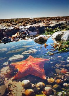 Tide Pool At Moss Beach In California Usa