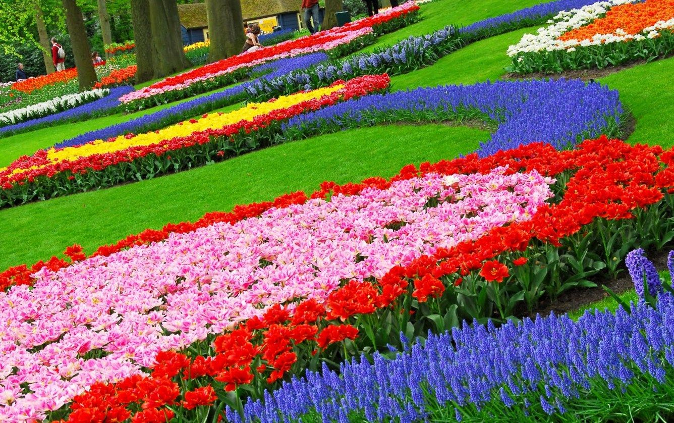 Garden design fascinating colorful garden decoration for Flower landscape ideas