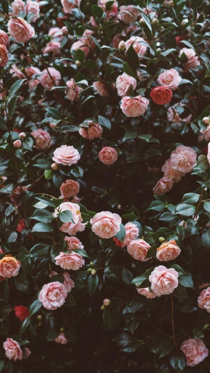 Gulpembe Shared By Irem On We Heart It Tumblr Flower Flower