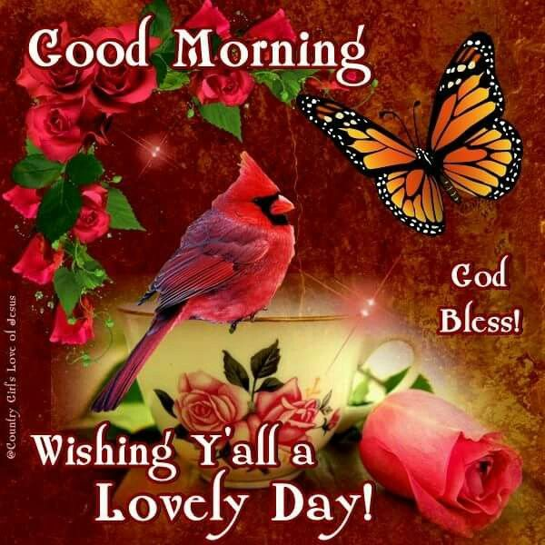 Good Morning Y All : Good morning wishing y all a lovely day pictures photos