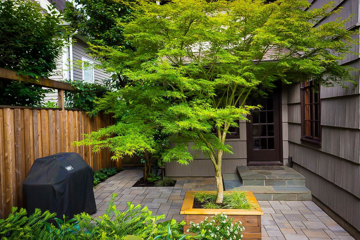 9676fb14201b7c415925be4e7f2fc1fd - Japanese Maple Trees For Small Gardens