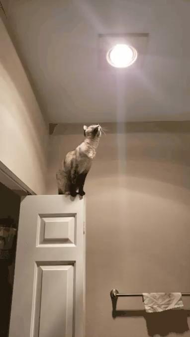 Photo of Get down, you little weirdo