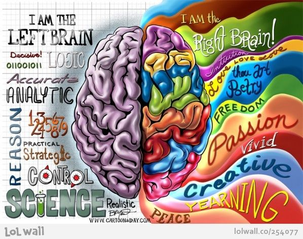 Right brain and left brain.