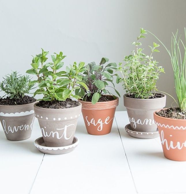 10 Tiny Herb Garden Ideas That Will Fit In Any Apartment Via Brit Co