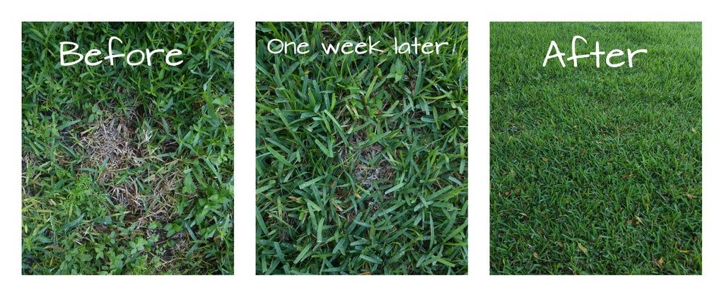 How To Get Rid Of Dead Spots In Grass