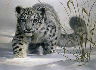 Snow Leopard Kucing Besar Kucing Lukisan
