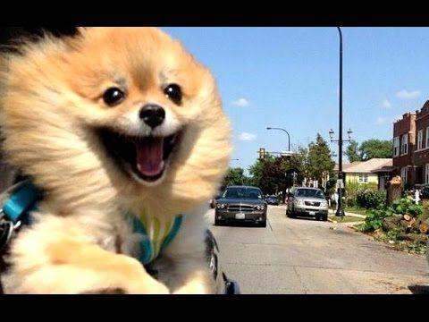 funniest dog videos ever