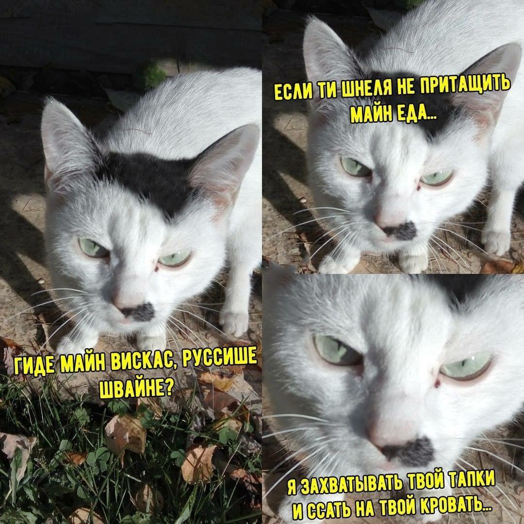 Смешные мемы про котов (45 фото)   Смешные мемы, Веселые ...