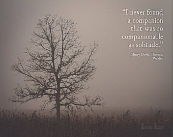 henry david thoreau walden quotes tree in fog photograph