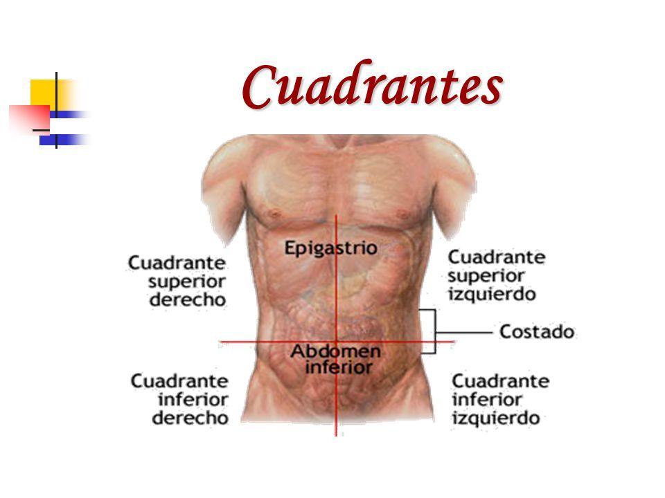 Hermosa Anatomía Cuadrante Superior Derecho Friso - Anatomía de Las ...