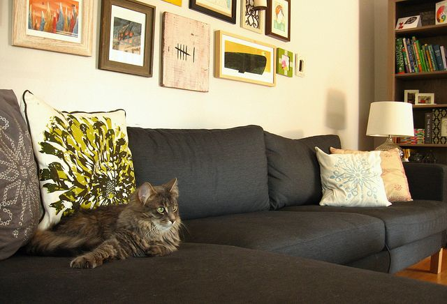 I think I need one of these...couch, not cat. But the cat is pretty cute too.