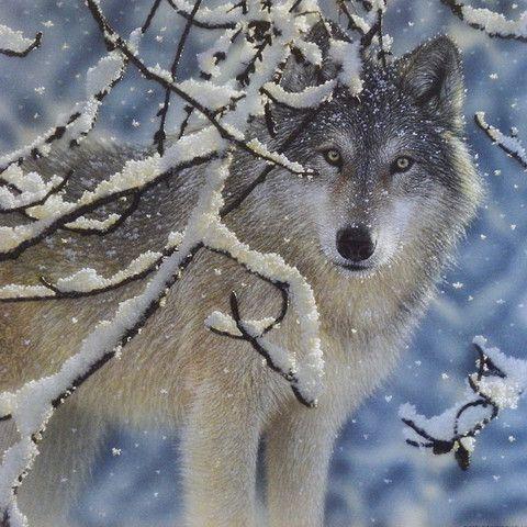 Wolf Art Print Animal Portrait Lone Wolf Nature Wall Art Winter Wolf Artist Collin Bogle Artwork Wolf Painting Snow Wildlife Art